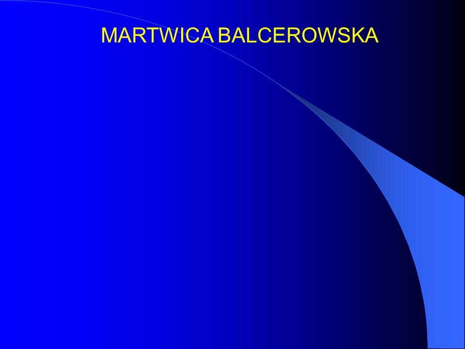 MARTWICA BALCEROWSKA