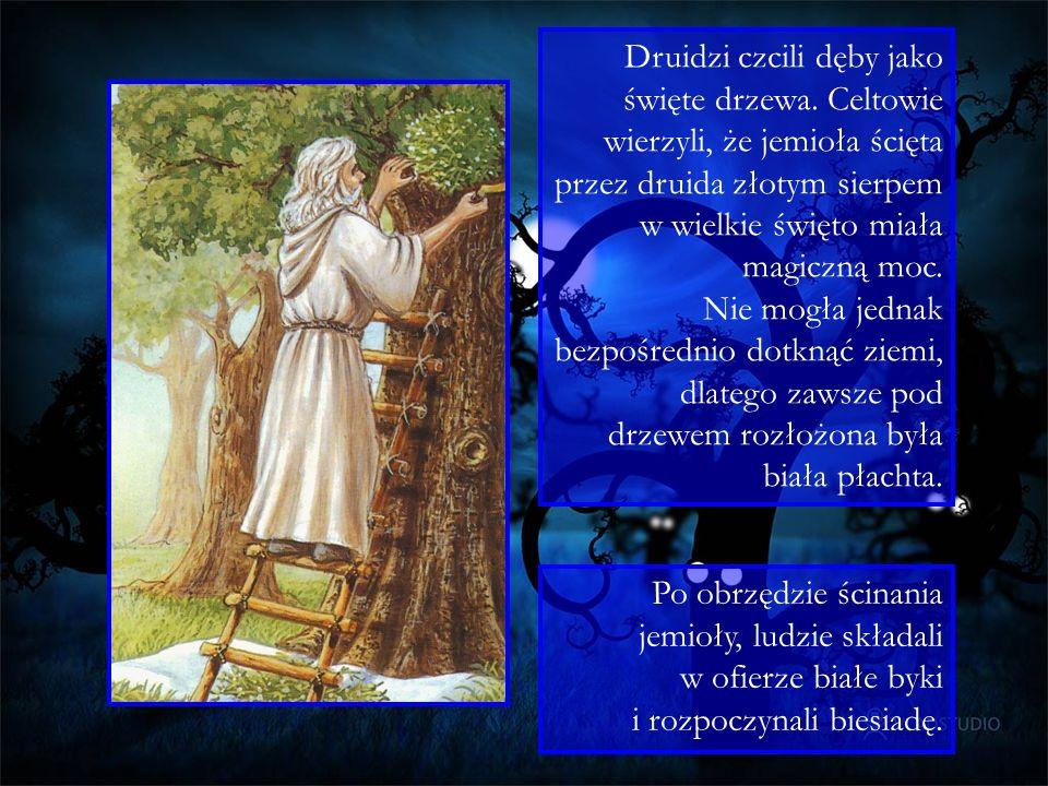 Druidzi czcili dęby jako święte drzewa