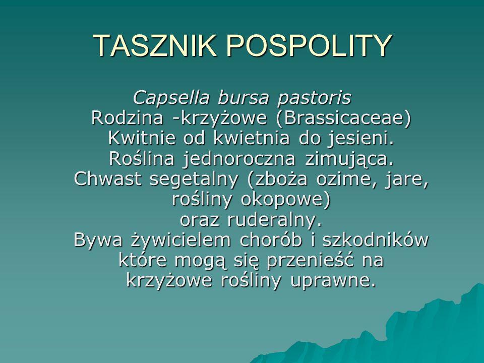 TASZNIK POSPOLITY
