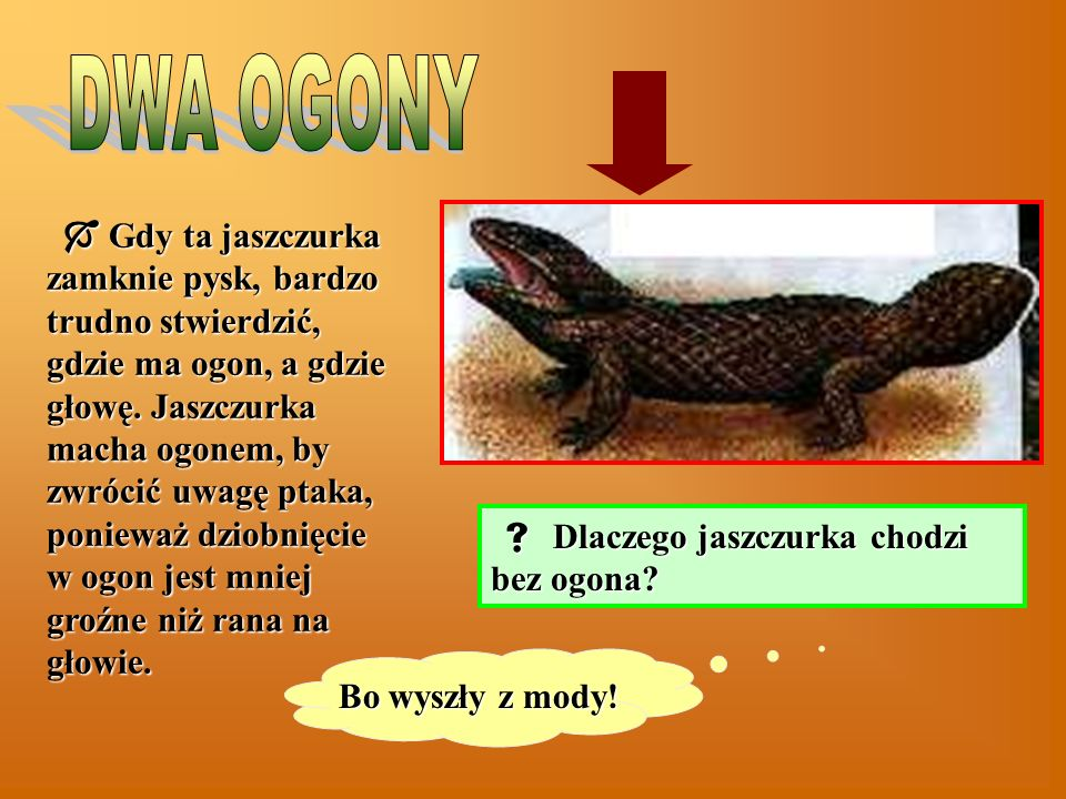 DWA OGONY