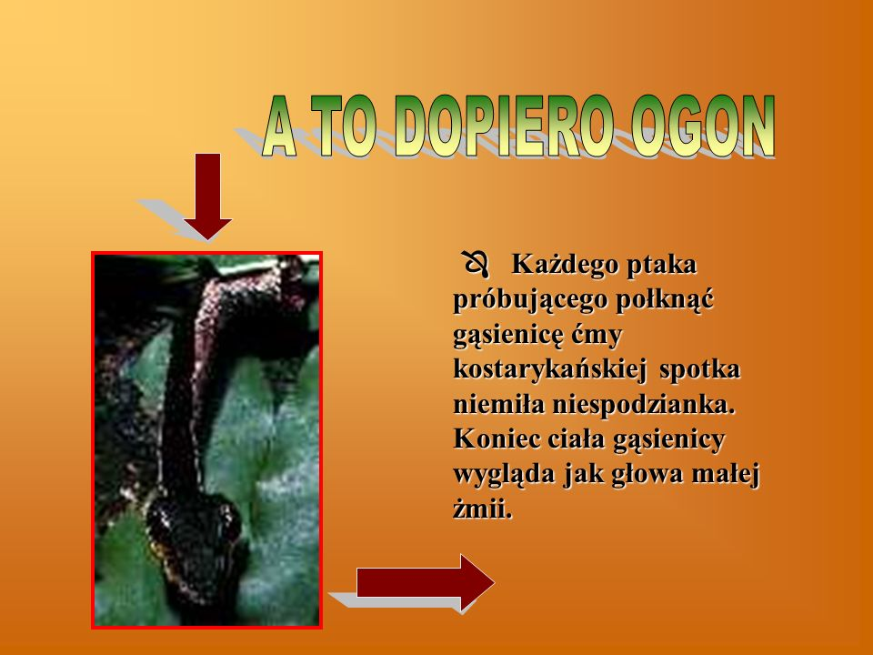 A TO DOPIERO OGON