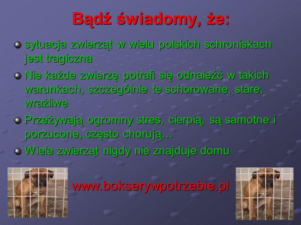 Bądź świadomy, że: www.bokserywpotrzebie.pl