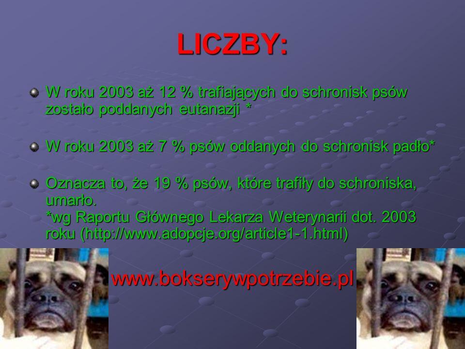 LICZBY: www.bokserywpotrzebie.pl