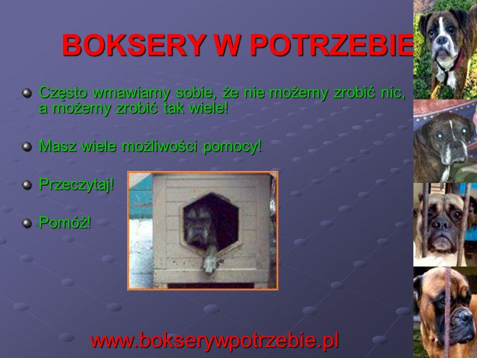 BOKSERY W POTRZEBIE www.bokserywpotrzebie.pl