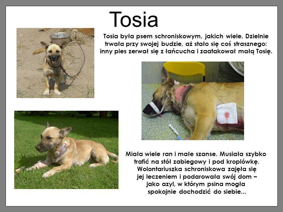 Tosia Tosia była psem schroniskowym, jakich wiele. Dzielnie