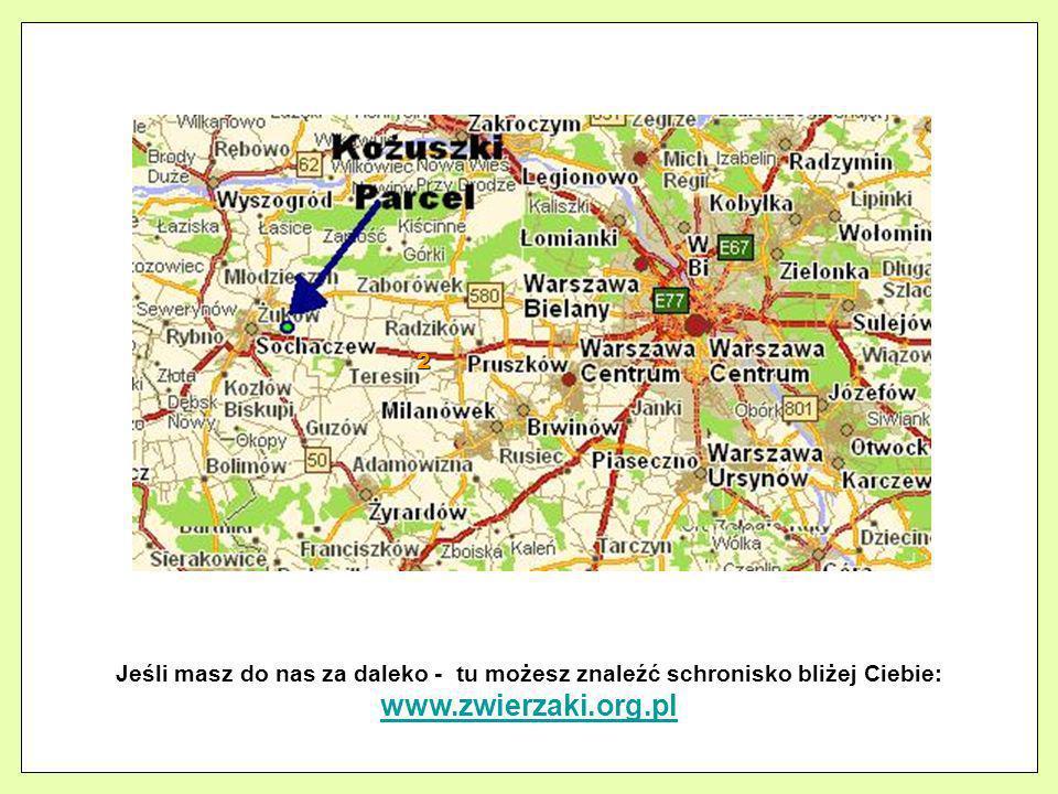 2 Jeśli masz do nas za daleko - tu możesz znaleźć schronisko bliżej Ciebie: www.zwierzaki.org.pl