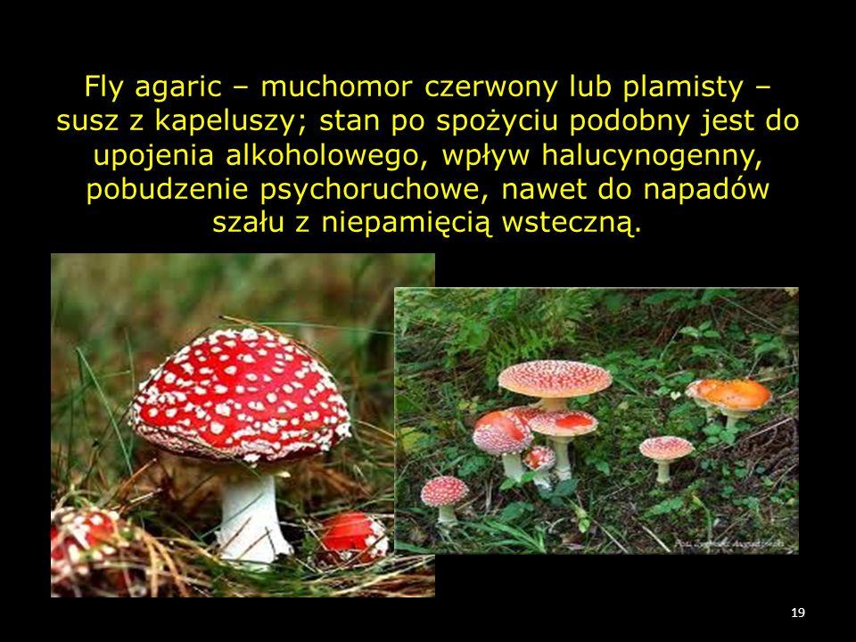 Fly agaric – muchomor czerwony lub plamisty – susz z kapeluszy; stan po spożyciu podobny jest do upojenia alkoholowego, wpływ halucynogenny, pobudzenie psychoruchowe, nawet do napadów szału z niepamięcią wsteczną.