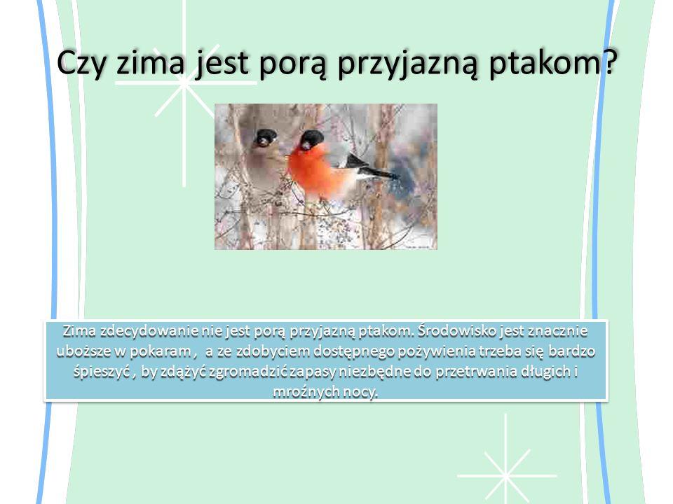 Czy zima jest porą przyjazną ptakom