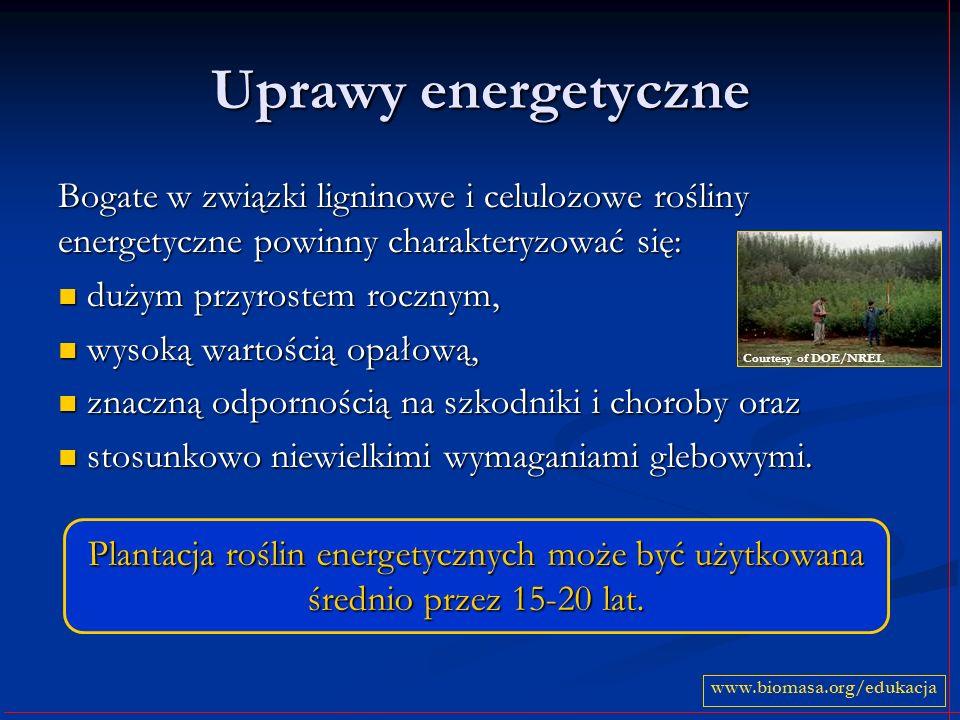 Uprawy energetyczne Bogate w związki ligninowe i celulozowe rośliny energetyczne powinny charakteryzować się: