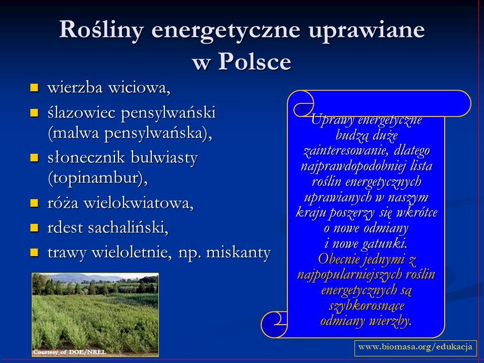 Rośliny energetyczne uprawiane w Polsce