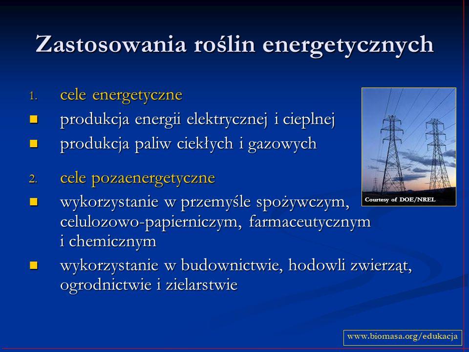 Zastosowania roślin energetycznych