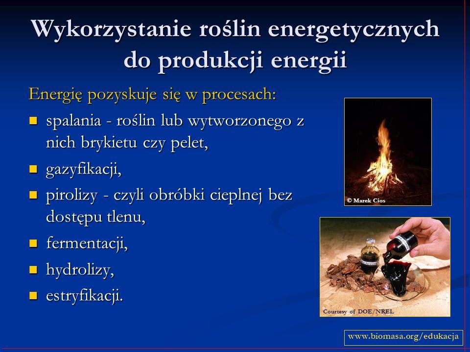 Wykorzystanie roślin energetycznych do produkcji energii