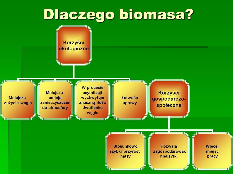 Dlaczego biomasa