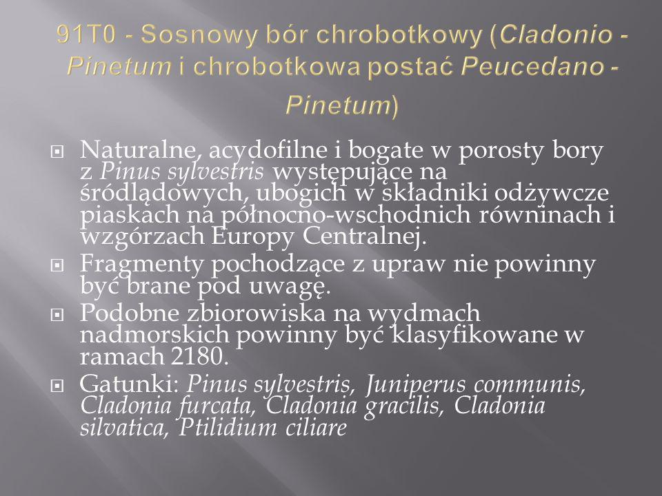 91T0 - Sosnowy bór chrobotkowy (Cladonio - Pinetum i chrobotkowa postać Peucedano - Pinetum)