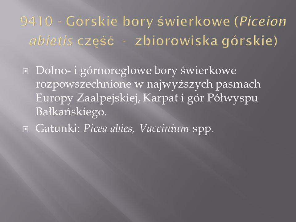 9410 - Górskie bory świerkowe (Piceion abietis część - zbiorowiska górskie)