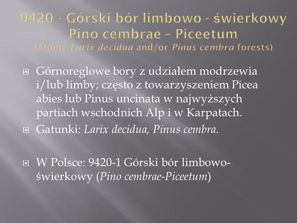 9420 - Górski bór limbowo - świerkowy Pino cembrae – Piceetum (Alpine Larix decidua and/or Pinus cembra forests)