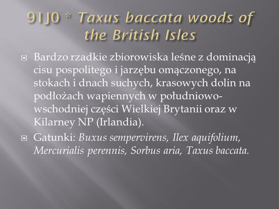 91J0 * Taxus baccata woods of the British Isles