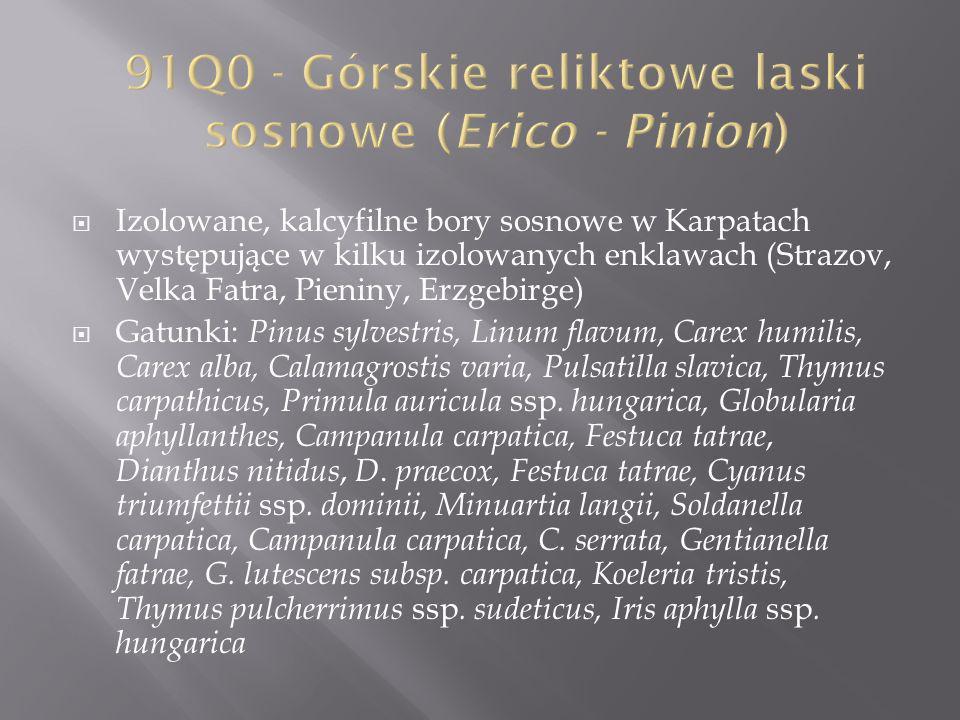 91Q0 - Górskie reliktowe laski sosnowe (Erico - Pinion)