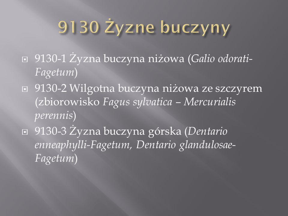 9130 Żyzne buczyny 9130-1 Żyzna buczyna niżowa (Galio odorati-Fagetum)