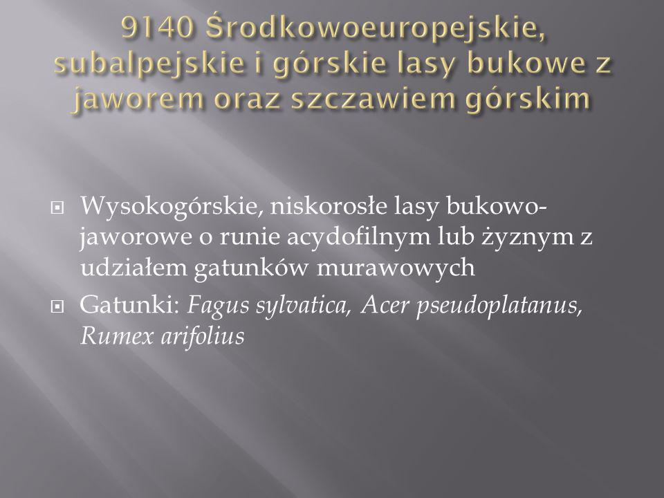 9140 Środkowoeuropejskie, subalpejskie i górskie lasy bukowe z jaworem oraz szczawiem górskim