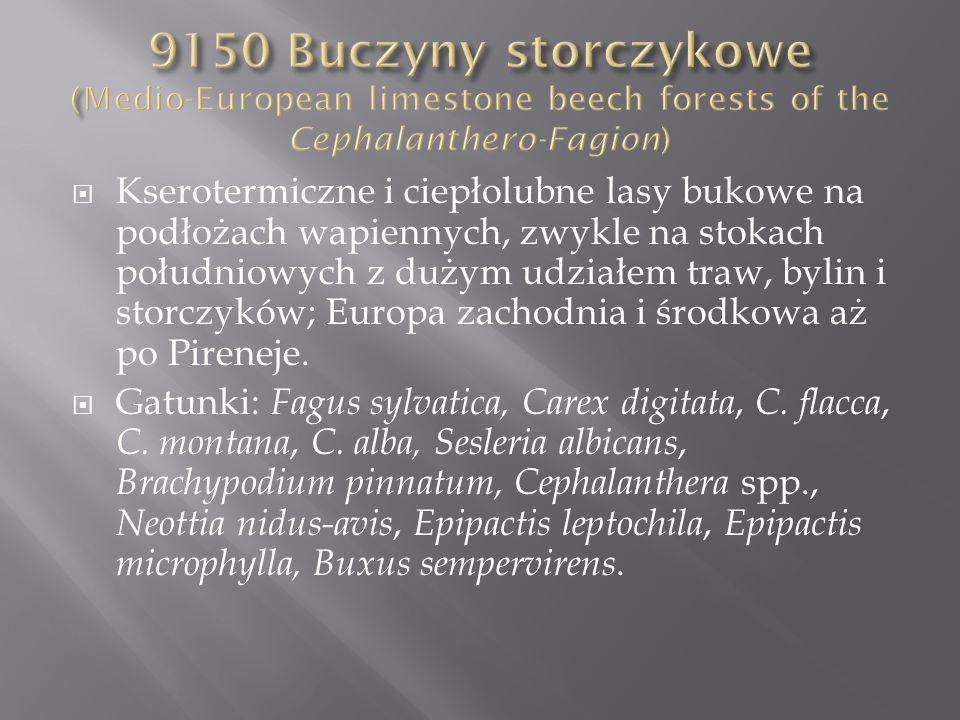 9150 Buczyny storczykowe (Medio-European limestone beech forests of the Cephalanthero-Fagion)