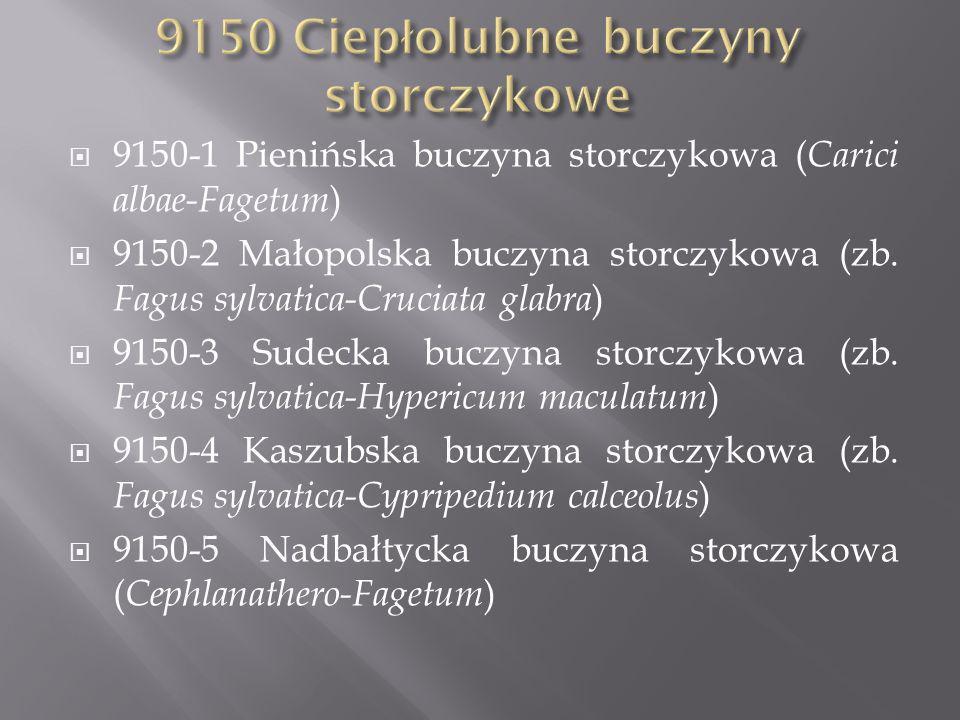 9150 Ciepłolubne buczyny storczykowe