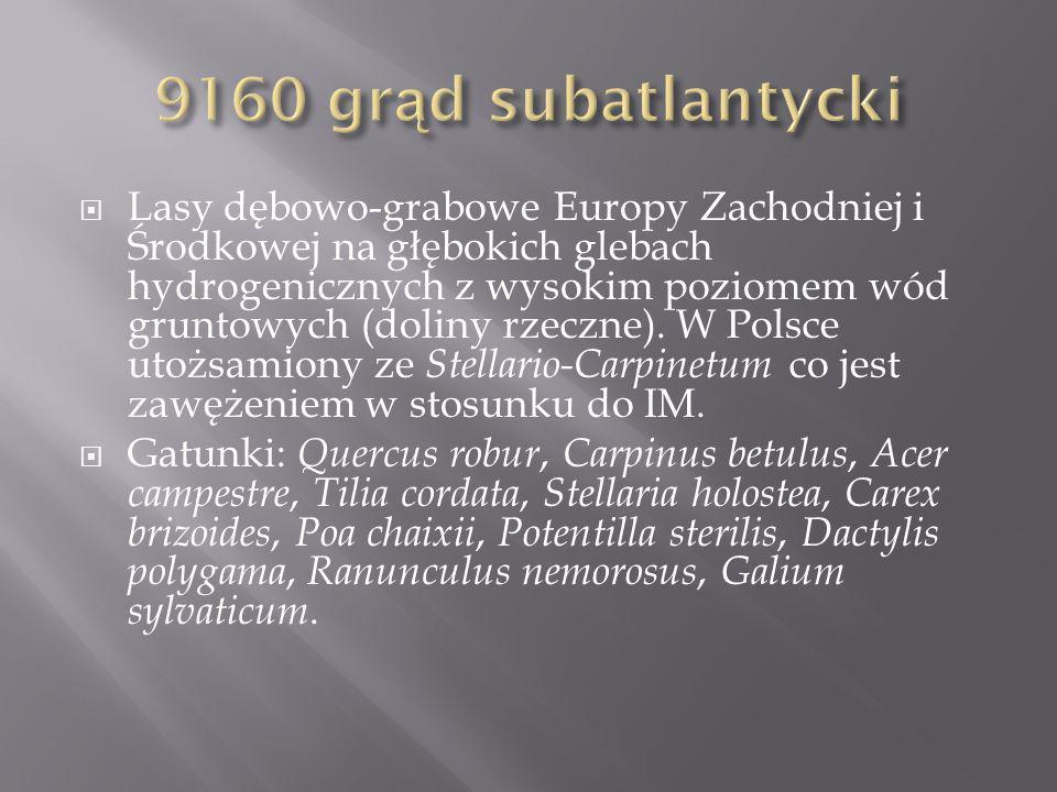 9160 grąd subatlantycki