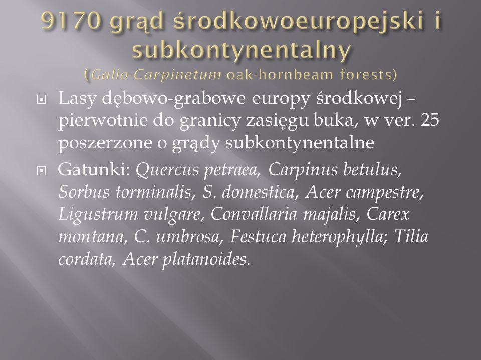 9170 grąd środkowoeuropejski i subkontynentalny (Galio-Carpinetum oak-hornbeam forests)