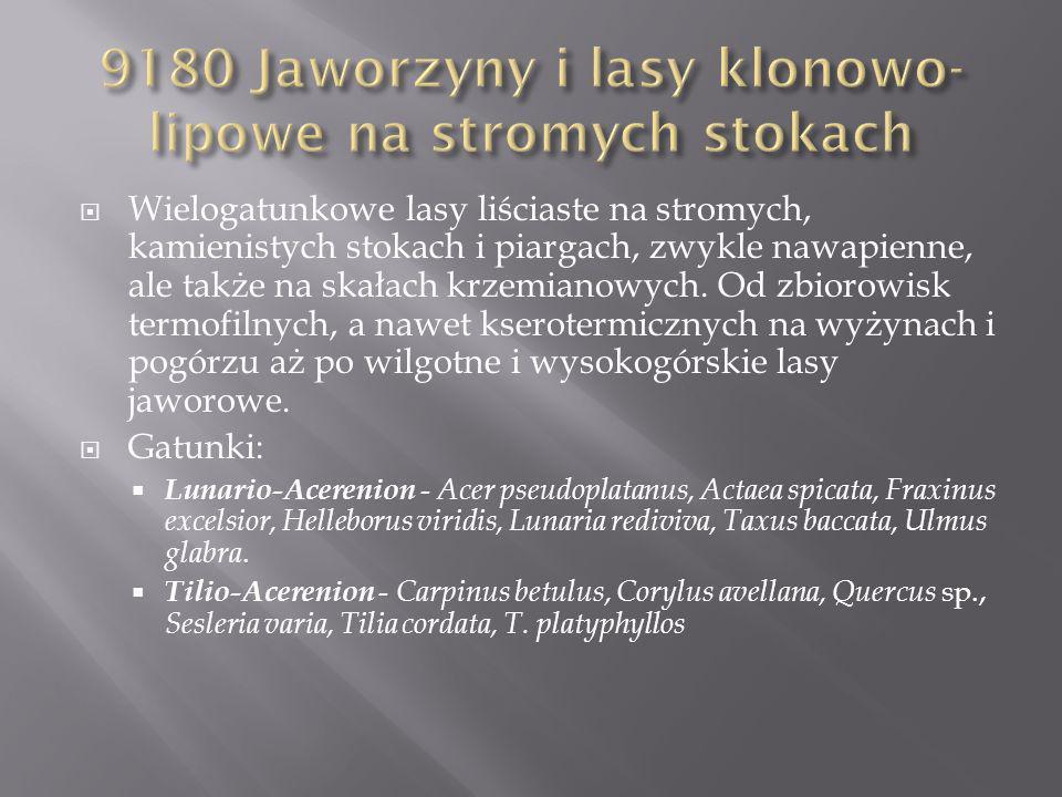9180 Jaworzyny i lasy klonowo-lipowe na stromych stokach