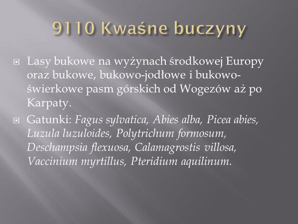 9110 Kwaśne buczyny Lasy bukowe na wyżynach środkowej Europy oraz bukowe, bukowo-jodłowe i bukowo-świerkowe pasm górskich od Wogezów aż po Karpaty.