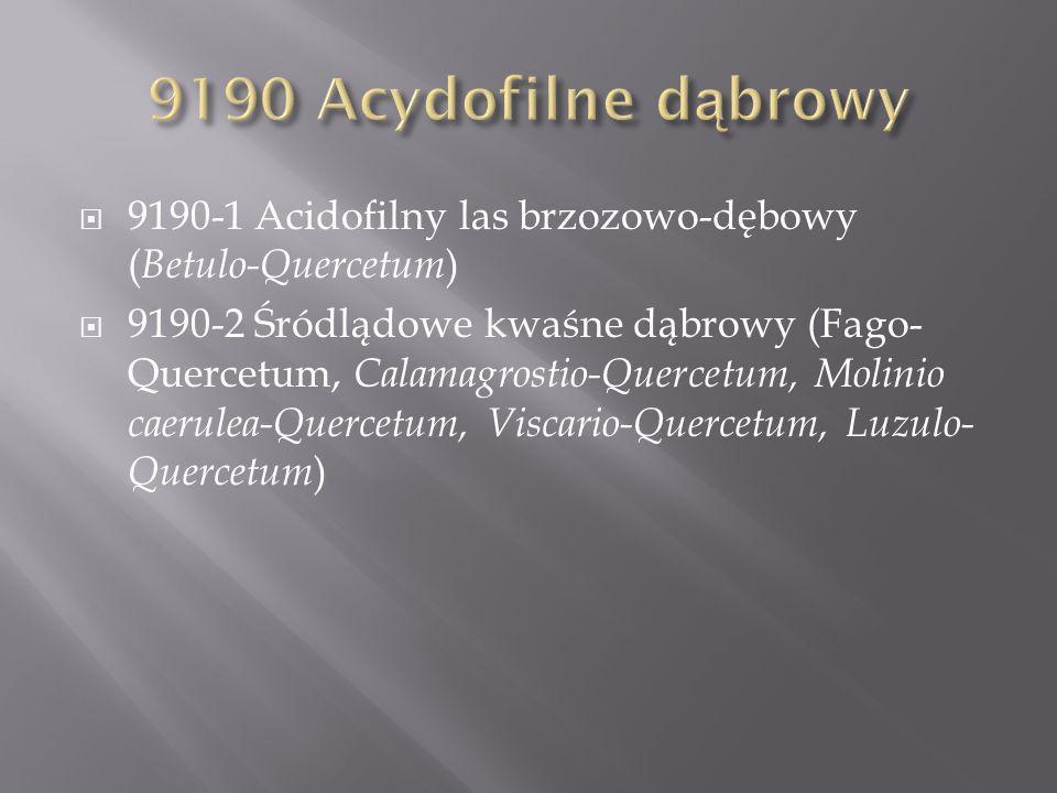 9190 Acydofilne dąbrowy 9190-1 Acidofilny las brzozowo-dębowy (Betulo-Quercetum)