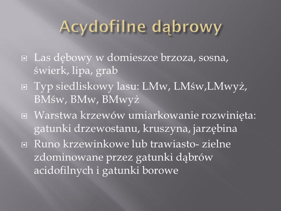 Acydofilne dąbrowy Las dębowy w domieszce brzoza, sosna, świerk, lipa, grab. Typ siedliskowy lasu: LMw, LMśw,LMwyż, BMśw, BMw, BMwyż.