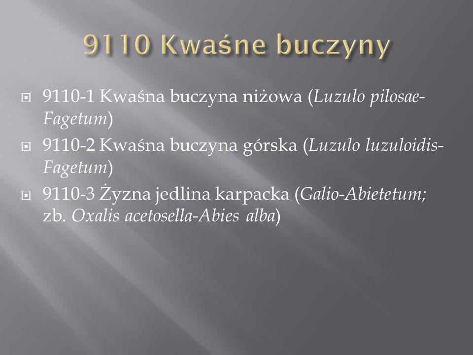 9110 Kwaśne buczyny 9110-1 Kwaśna buczyna niżowa (Luzulo pilosae-Fagetum) 9110-2 Kwaśna buczyna górska (Luzulo luzuloidis-Fagetum)