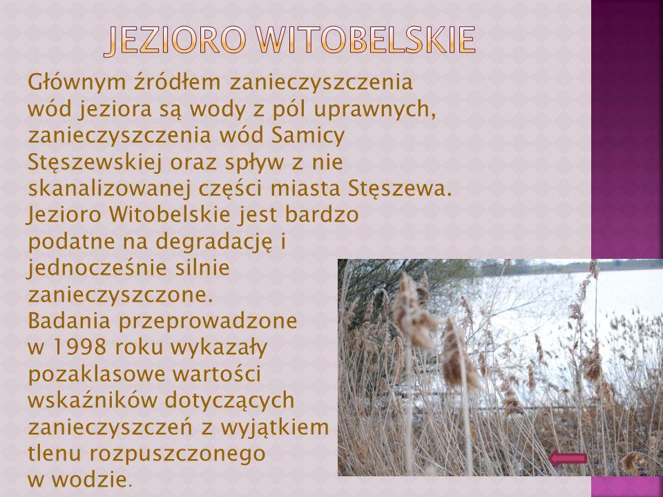 Jezioro witobelskie