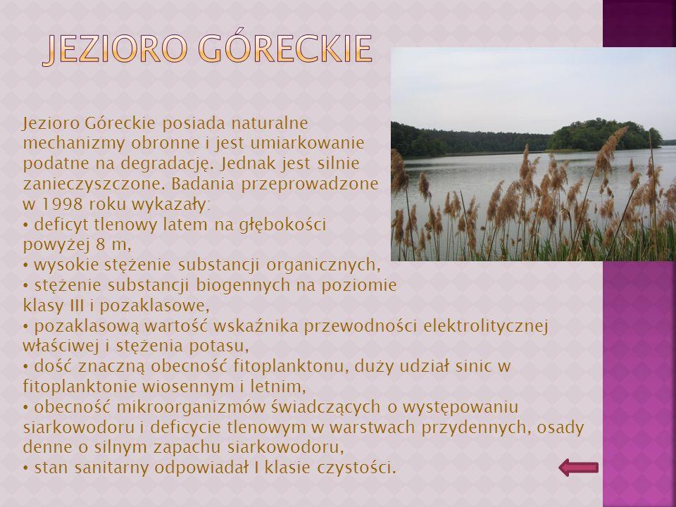 Jezioro góreckie Jezioro Góreckie posiada naturalne