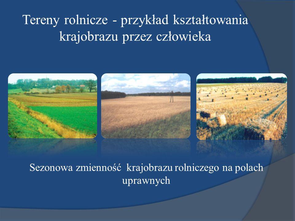 Tereny rolnicze - przykład kształtowania krajobrazu przez człowieka