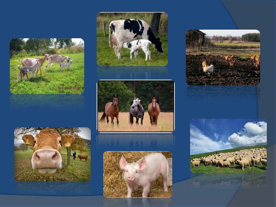 Zwierzęta hodowane w Polsce: