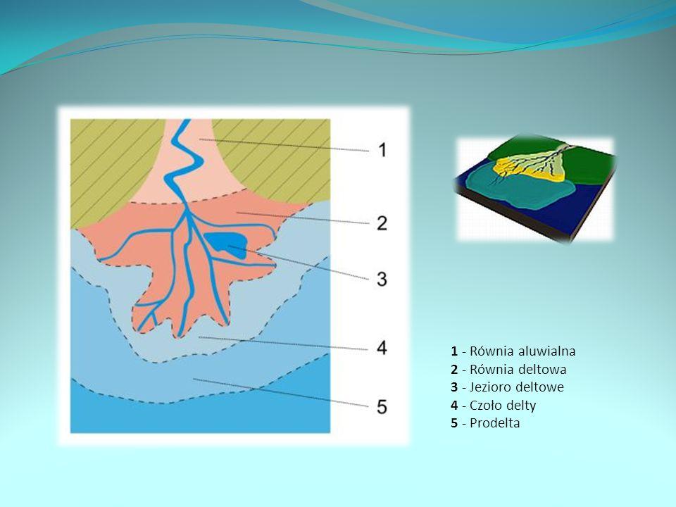 Ujścia typu deltowego powstają w przypadku, gdy rzeka uchodzi do zbiornika wodnego (morza lub jeziora), który charakteryzuje się nieznacznymi wahaniami poziomu wody - w przeciwnym przypadku powstają estuaria. Delty składają się z części wynurzonej ponad poziom wody – tam: obszary płytkich depresji, oraz z części zanurzonej Czynnikami sprzyjającymi powstawaniu delt jest duża ilość transportowanego i akumulowanego materiału oraz odpowiednie cechy zbiornika wodnego. Powinien być on płytki i nie powinny w nim występować zbyt silne ruchy wody (prądy i pływy).