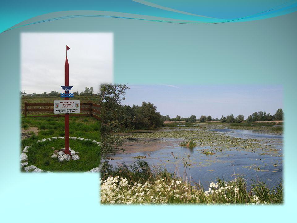 Na terenie Żuław występują obszary depresyjne, sięgające 1,8 m poniżej poziomu morza (Raczki Elbląskie).