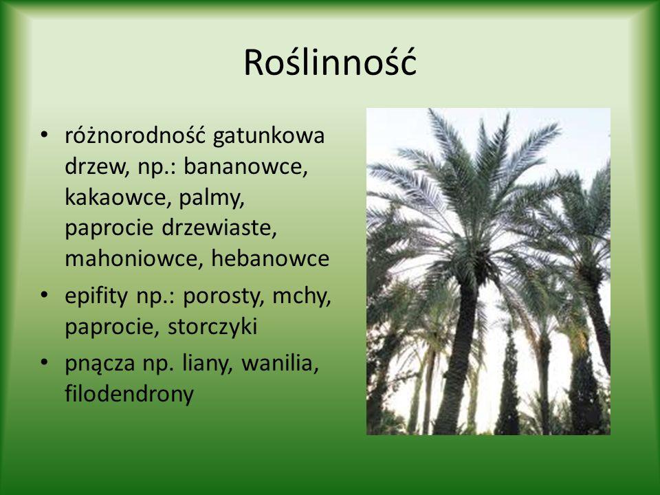 Roślinnośćróżnorodność gatunkowa drzew, np.: bananowce, kakaowce, palmy, paprocie drzewiaste, mahoniowce, hebanowce.