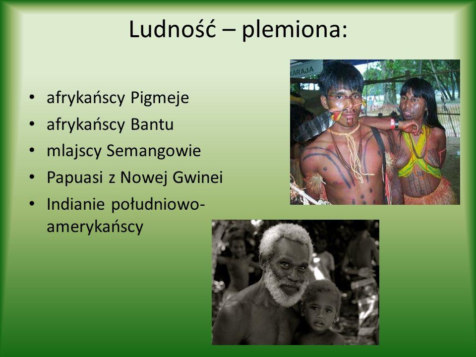 Ludność – plemiona: afrykańscy Pigmeje afrykańscy Bantu