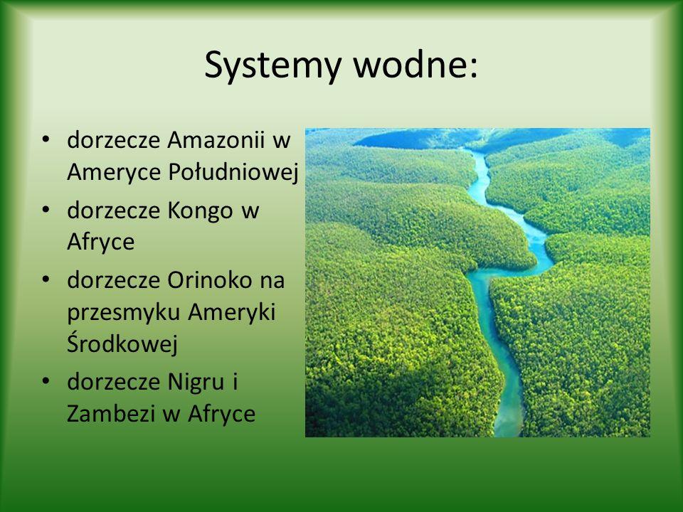 Systemy wodne: dorzecze Amazonii w Ameryce Południowej