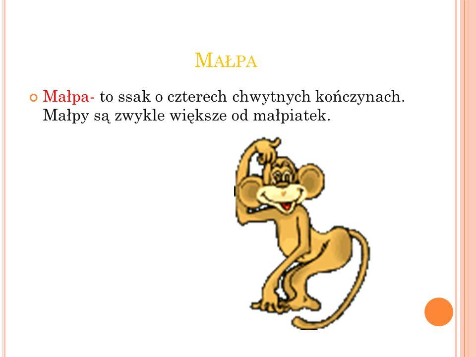 Małpa Małpa- to ssak o czterech chwytnych kończynach. Małpy są zwykle większe od małpiatek.