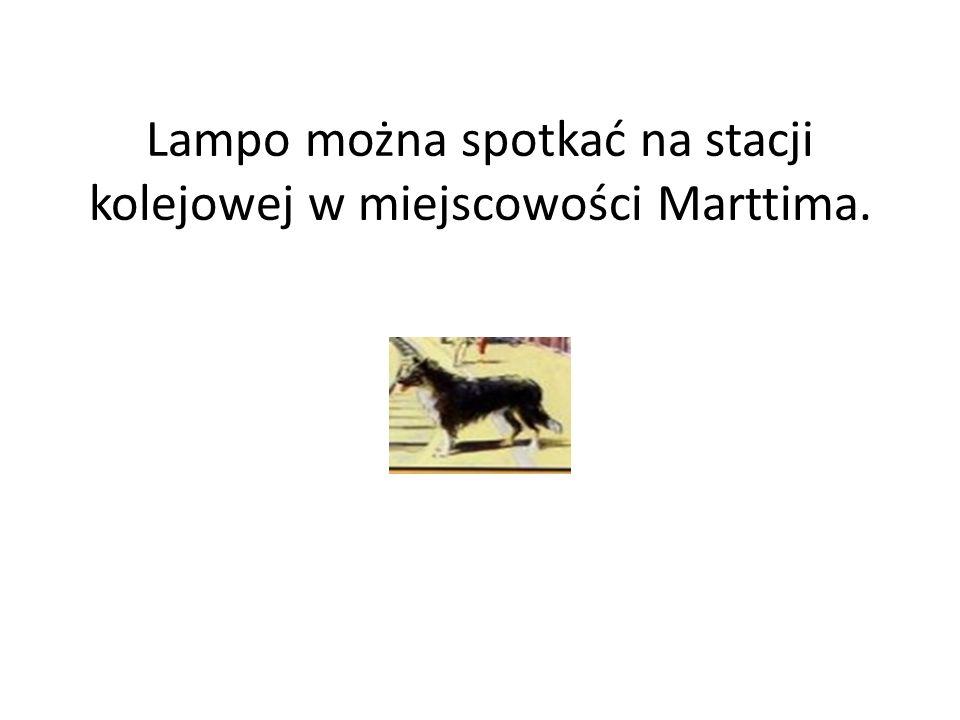 Lampo można spotkać na stacji kolejowej w miejscowości Marttima.