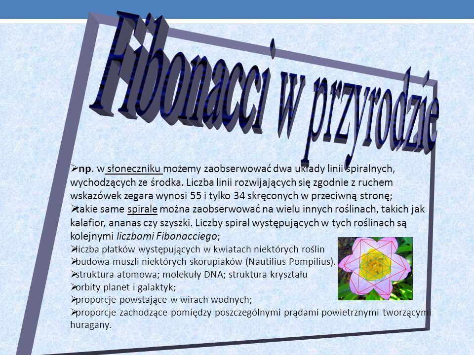 Fibonacci w przyrodzie