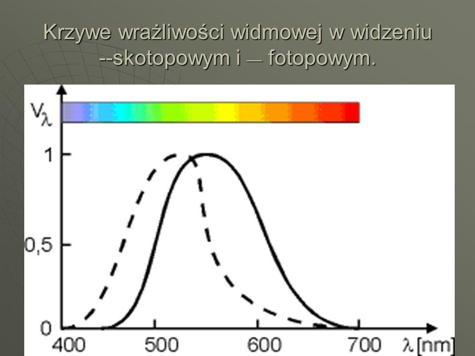 Krzywe wrażliwości widmowej w widzeniu --skotopowym i __ fotopowym.
