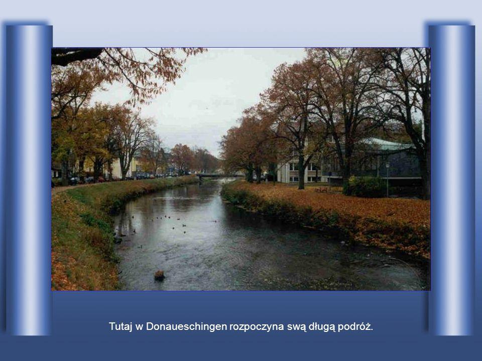 Tutaj w Donaueschingen rozpoczyna swą długą podróż.