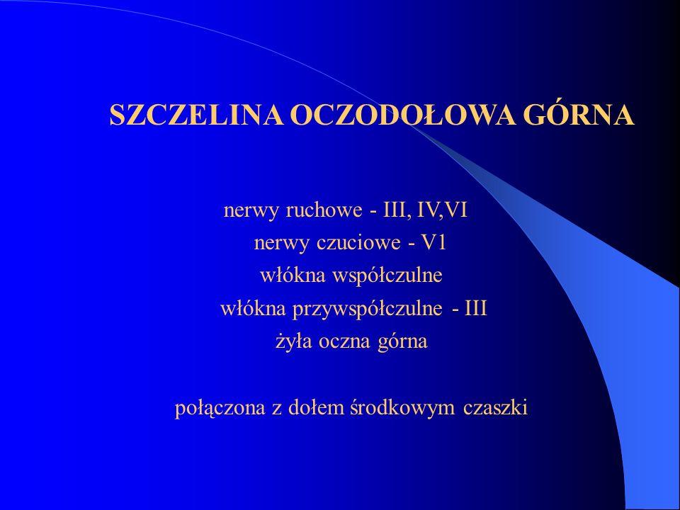 SZCZELINA OCZODOŁOWA GÓRNA nerwy ruchowe - III, IV,VI