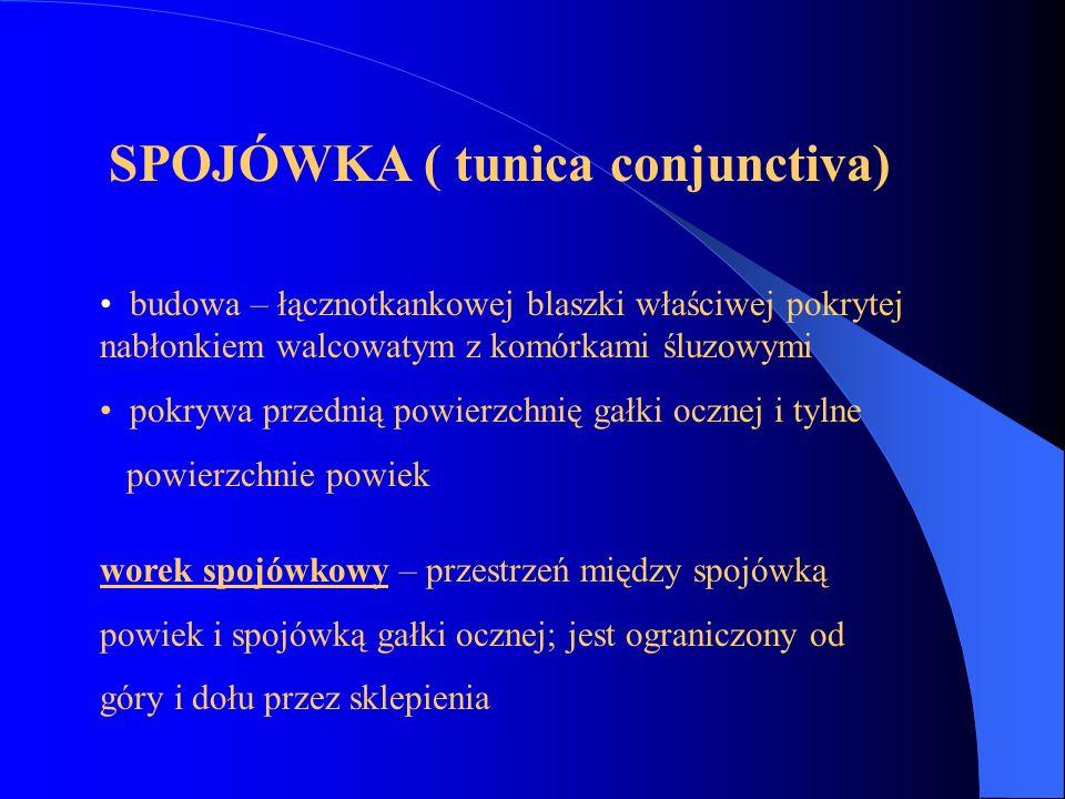 SPOJÓWKA ( tunica conjunctiva)
