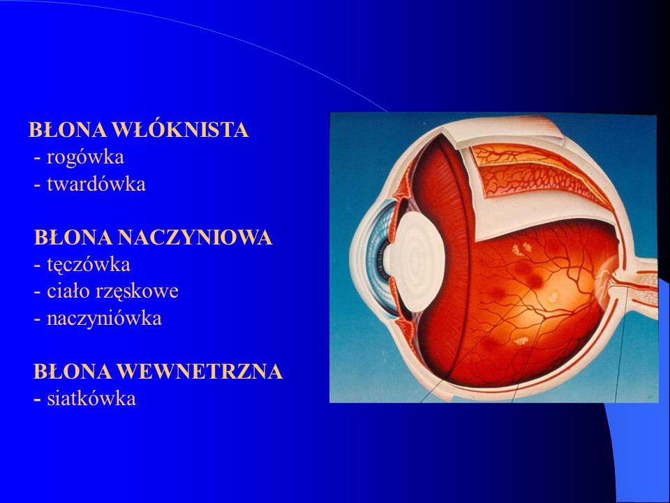 BŁONA WŁÓKNISTA - rogówka - twardówka BŁONA NACZYNIOWA - tęczówka